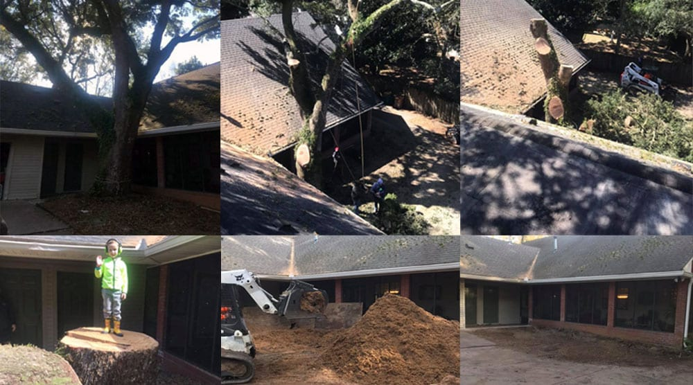 This tree was too close to the house causing damage to the roof and making the house too dark inside. Bobcat Tree Work, LLC removed it without a scratch, ground the stump, cleaned up the yard, and had made some friends in the process.